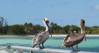 Pigeon Key AC Company in Middle Keys